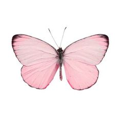 butterfly emoji - - Yahoo Image Search Results
