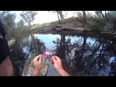 Murray cod fishing. Cod Convention - YouTube