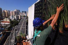 Os tons de verde das 29 espécies de plantas que vão cobrir o Condomínio Edifício Huds, localizado entre a Rua   Helvétia e a Avenida São João, já podem ser vistos por quem passa pelo Minhocão, na região central da capital (Foto: HÉLVIO ROMERO/ESTADÃO CONTEÚDO)