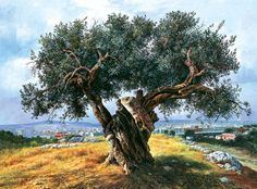 Olive tree in Filopappou, Athens, painting by Elidon