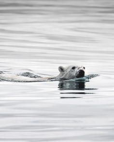Joe Shutter Shares P Bear Pictures Arctic Animals Arctic