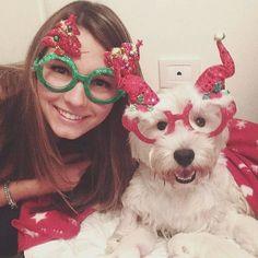 Buon primo dicembre!  Ma quanto sono belle? E voie il vostro cagnolone a che punto siete con gli addobbi?  Foto di @frencyfa  #BauSocial  La piccola aiutante di Babbo Natale     #aspettandoilnatale #christmasspirit #christmasdecorations #dogs #westie #westhighlandwhiteterrier #happiness #december #natale #christmas #cane #cani #milano #italia #love #instadog #dogstagram #doglovers #westigram #westiemoments