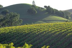 Vacation In The Sonoma Wine Country, California