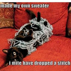 A little cat and yarn humor to brighten up your day!