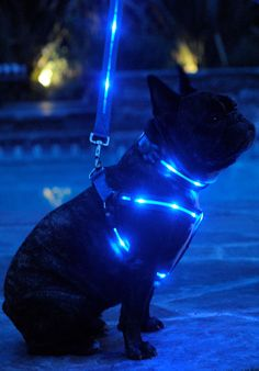 A must have for any dogs out in the dark.  Call to order:  1-310-666-7424