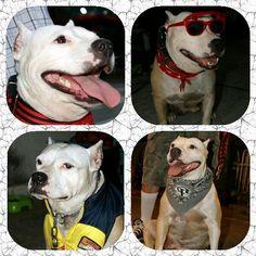 Chino Petesscool (Nextcool Family) My Dog