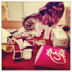 This is why Meredith is the best cat.