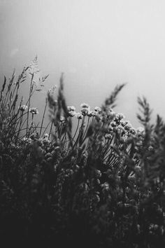 Damien Rice, Day Of Silence, Nature Sketch, Madding Crowd, Photo Black, Volcano, Black And White Photography, Vulnerability, Wild Flowers
