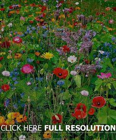 15 Interesting Wildflower Garden Ideas Design Inspirational