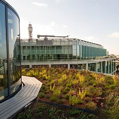 Bio-Diverse Green Roof for Regents Place