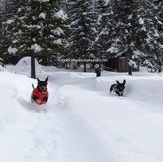 Racing through the snow!