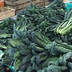 """Bunches of organic cavolo nero fresh from our market garden - delicious on its own or pair with Jerusalem artichokes for added flavour and fibre. The recipe for our kale and Jerusalem artichoke winter tart is on my blog now #organic #kale #cavolonero #je"