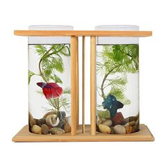 Fish Bowls Bamboo,Segarty Unique Cool Design Small Square Glass Vase Creative Aquarium Kit with Gravel and Shells, Desktop Decorative Fish Tank Could be Betta Fish & Gold Fish Pot