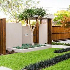 minimalist garden integrating the best outdoor activities on garrell street featuring black mondo grass centre australia
