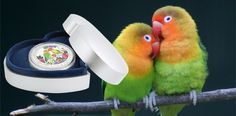 """Lovebirds Feature on 2017 """"Love is Precious"""" Silver Coin Mint Coins, Silver Coins, Love Birds, Parrot, Stage, Valentines, Christmas, Silver Quarters, Parrot Bird"""