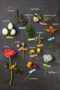 different flower types