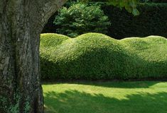 These sculptures in Buxus are part of a Vitalis-garden. www.vitalistuin.be