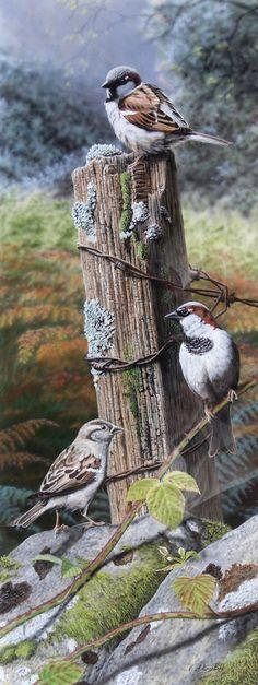 The Morning Post (verkauft) -Nigel Artingstall British - Wildlife Artist Wildlife Paintings, Wildlife Art, Animal Paintings, Bird Paintings, Pretty Birds, Beautiful Birds, Bird Drawings, Horse Drawings, British Wildlife