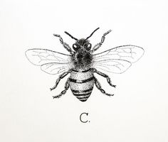 honey bee tattoo black and white - Google Search