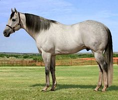 AQHA quarter horse racing stallion, Eyesa Special. x.vu/...