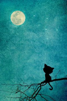 Cat on a branch...staring up at the moon<3