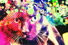 amy5010 can make even cats on the Internet feel new and interesting. She always shares creative work with us in the Pixlr on Flickr group, a... Computer Art, Free Photos, Photoshop, Internet, Canning, Group, Feelings, Cats, Creative
