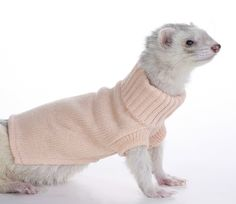 Marshall Ferret Sweater, Colors May Vary: Amazon.ca: Pet Supplies