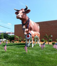The Cow's at Anderson Erickson Dairy in Des Moines, Iowa. Their old fashioned cottage cheese is absolutely the best cottage cheese ever!!!