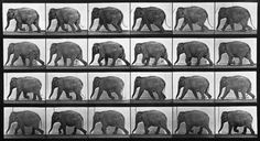 Just discovered this today, and I want.  Animal Locomotion: Plate 733 (Elephant), by Eadweard Muybridge - 20x200.com (from $60)
