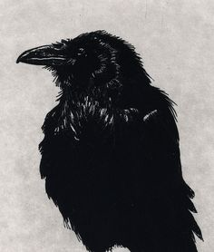 Last One left in black edition - Award Winning Print -Raven  Series- RAVEN DECIDES Not to Create MAN- Etching 5 x 7inch 2010. $37.50, via Etsy.