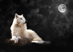Wolf by moonlight