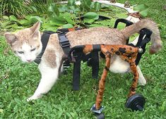 """Wheelchairs for pets and animals. Buy or sell new and used.  / click photo then click on """"blog amsvans.com"""" (bottom left)."""