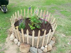 Garden I planted over a tree stump in the backyard