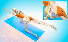 The Daily Bandha: The Sacroiliac Joint