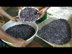 Hybrid Magur Business In India Fish Breeding, Fish Farming, India, Business, Amazing, Youtube, Goa India, Store, Business Illustration