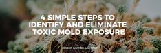 4 Simple Steps to Identify and Eliminate Toxic Mold Exposure — Bridgit Danner, Functional Health Coach & Detox Expert Symptoms Of Mold, Turmeric Uses, Mold Exposure, Toxic Mold, Organic Acid, Sinus Congestion, Womens Wellness, Skin Rash, Health Coach