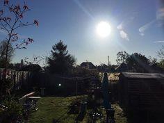 Sunshine & blue sky over my garden this morning. #tw