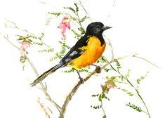 Baltimore Oriole, bird artwork, original watercolor, oriole bird, yellow black wall art, birds, birds of america, birds and flowers by ORIGINALONLY on Etsy