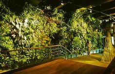 Vertical garden in Genoa Aquarium, Italy. Done by Patrick Black.