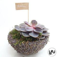 MARTURII plante suculente in suport sferic LAVANDA - M8 - https://www.yau.ro/collections/marturii-nunta-si-botez?page=1 - yauconcept - elenatoader