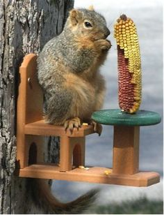 Durable Squirrel Feeder s guaranteed for life! A fun design in new recycled plastic, this poly lumber squirrel feeder features a table and chair where squirrels can actually sit and eat corn from the Squirrel Feeder, Bird Feeders, Animals And Pets, Funny Animals, Cute Animals, Wild Animals, Baby Animals, Bois Diy, Outdoor Projects