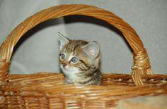 Auch die kleinste Katze ist ein Meisterwerk! Picnic, Outdoor, Animals, Outdoors, Outdoor Games, Outdoor Living, Picnics