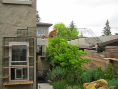 Esses gatis mostram que para quem mora em casa falta de espaço não é desculpa para não fazer um. Eles são compactos, seguros e os felinos A...