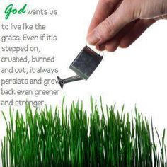 God wants us to live like the grass.  Even if it's stepped on, crushed, burned and cut, it always persists and grows back even greener and stronger.