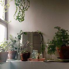 bath and plants