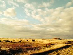 Sask Prairies- November 2013 November 2013, Vineyard, Mountains, Nature, Photography, Travel, Outdoor, Outdoors, Photograph