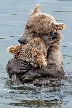 Brown bear mama hugging her cub. Amazing Animals, Majestic Animals, Animals Beautiful, Cute Baby Animals, Animals And Pets, Funny Animals, Animal 2, Animal Hugs, Tier Fotos