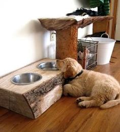 DIY pet dishes in a log. cool idea if your dog slobbers bucket-loads like my dog rudy!