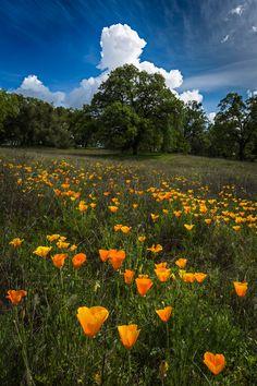 "isawatree: "" Rise Up - Folsom Lake, California by Tactile Photo """
