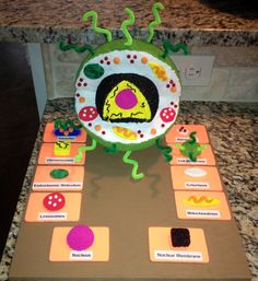 Great project for students to do when learning about the inside of a cell.